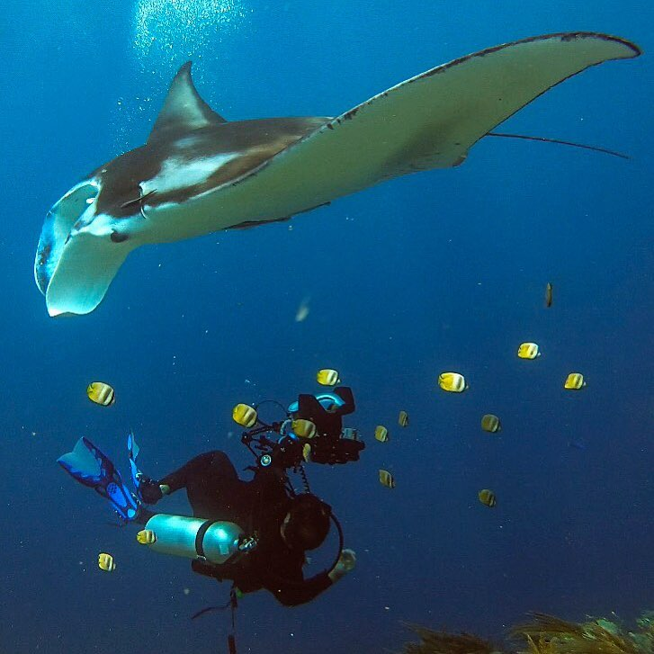 The Secret of Manta Rays's Social Life See Manta Point Bali