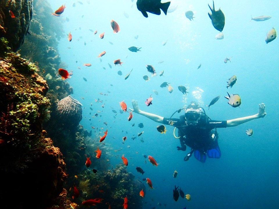 The Blissful Amed Diving