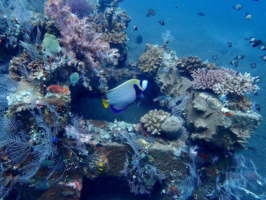 This Diving in Amed Bali Will Awe You for Days!