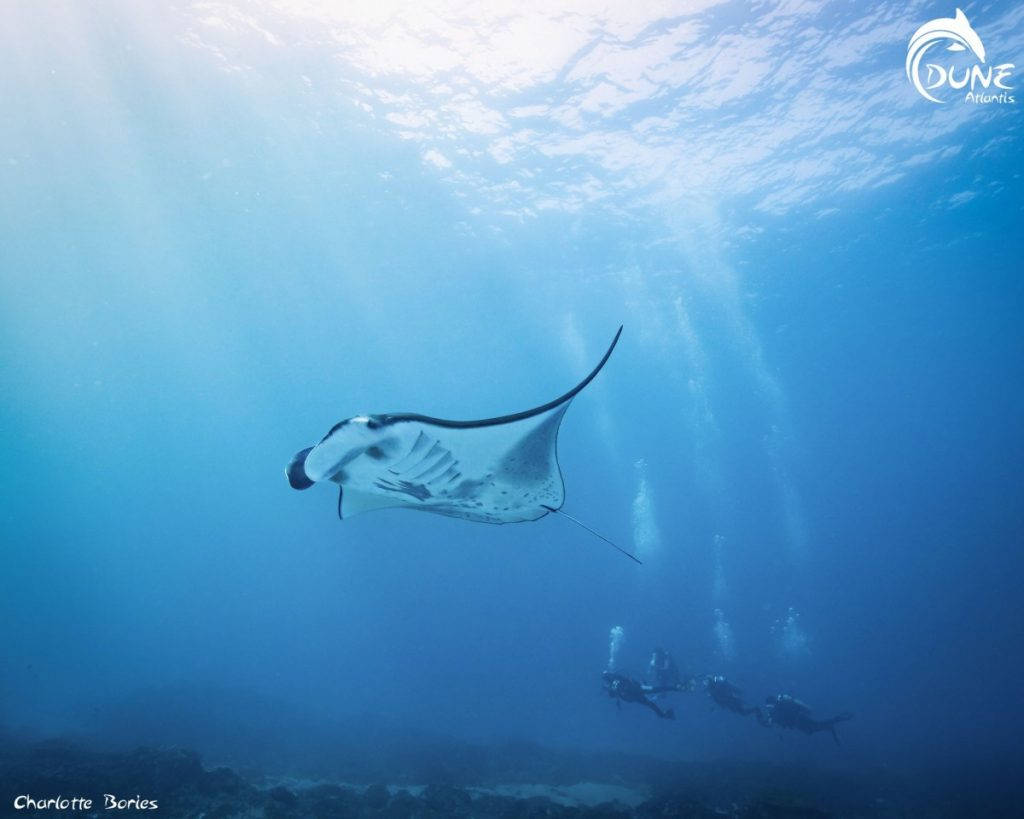 Before You Go Diving in Manta Point Bali- the Guide