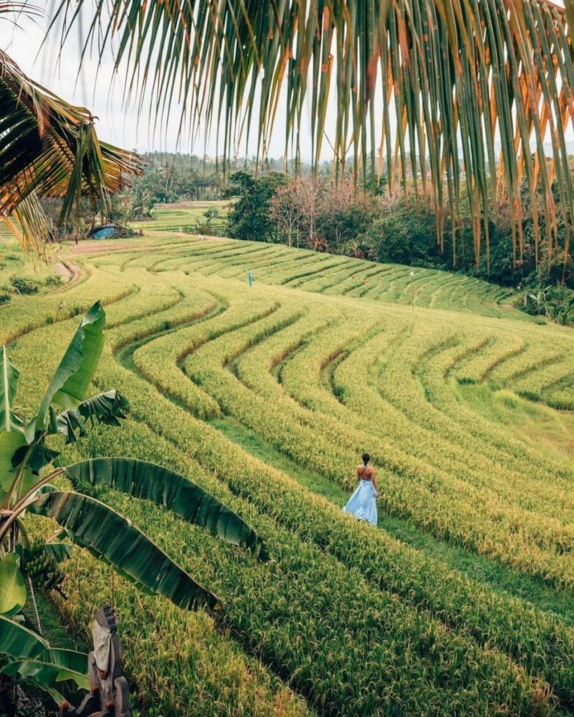 Life in Villa Ubud Surrounded by Rice Fields and Forests