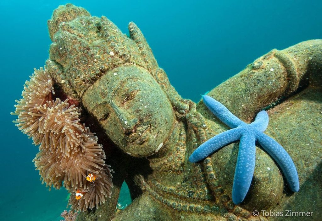 Tips for Embarking Thrilling Scuba Diving Adventure in Bali
